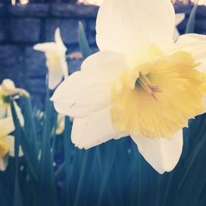 Piedmont Park Flowers | www.flonmymind.com