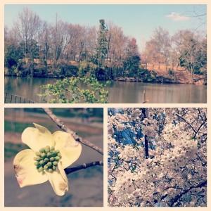 Piedmont Park Blooms | www.flonmymind.com