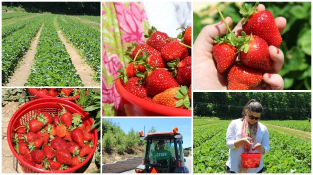 Strawberry Picking | Simple OOTD