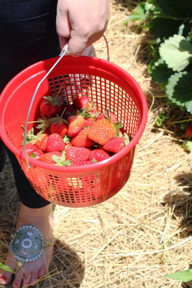 Strawberry Picking | Simple OOTD 2