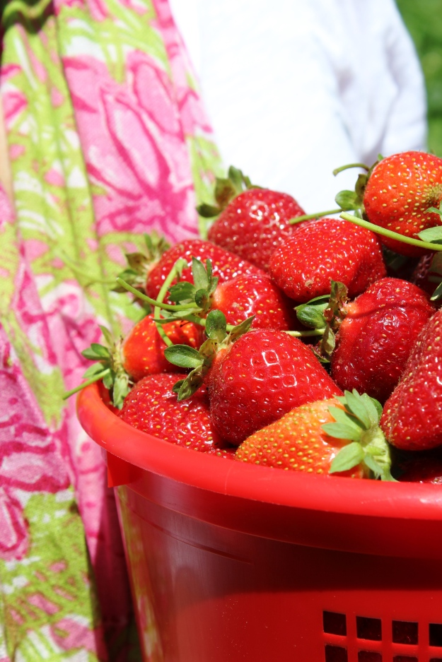 Strawberry picking OOTD 3
